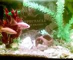 mes poissons rouges magicien PREMIERE MONDIAL