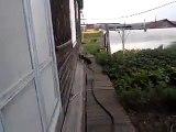 Un chien qui va chercher et porte... un chat !