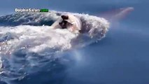 Une maman dauphin refuse de se séparer de son bébé mort