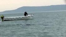 Le monstre du Loch Ness filmé en Irlande ?