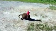 Un chien porte secours à un chat qui a la tête coincée dans un gobelet