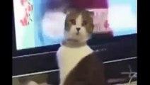 Chats drôles Vidéos Essayez de ne Pas Rire Que vous Faire Rire si fort