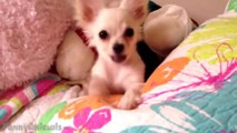 Funny Videos - Funny Animals - Cute Puppies - Dogs Compilation