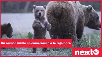 Un ourson invite un cameraman à le rejoindre