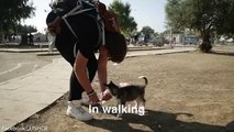 Syrian refugee carries dog 500km to safety
