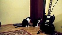 Кошка просит прощения Ржу не могу!