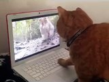 Cute cat chasing a squirrel on a PC ,hilarious