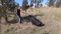 Un débile fait asseoir un cochon en le menaçant avec un gros pistolet Smith & Wesson