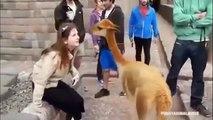 Vidéos drôles de chat 2015 | Funniest vidéo 2015 | Animaux drôles compilation