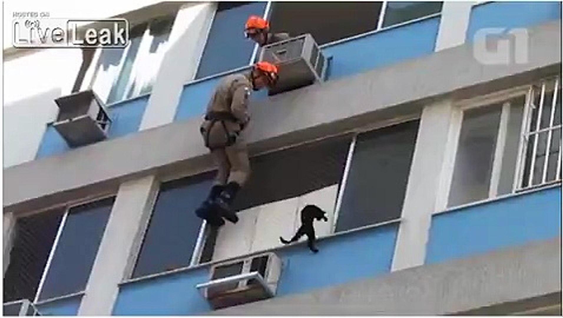 LiveLeak com - Cat rescue goes wrong