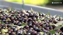 L'huile d'olive italienne n'est pas italienne