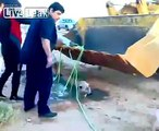 LiveLeak.com - trying to safe a camel goes   terribly wrong