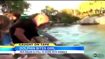 Dolphin Bites Child_ Orlando Seaworld Dolphin Caught on Tape _ Good Morning America _ ABC News