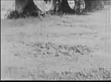 Viens avec nous, un film des FRANCAS (1954)