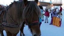 Un cheval et des skis : testez le Ski Joëring !