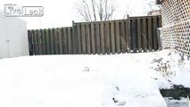 LiveLeak.com - Chasing Squirrels