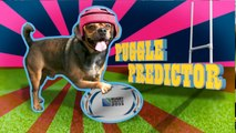 New Zealand v Namibia: Rugby World Cup 2015 - Puggle Predictor