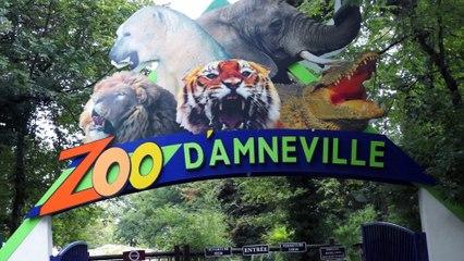 Gillou au Zoo d'Amnéville