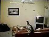 Nokia 3560 Funny Cat Flying With  Fan