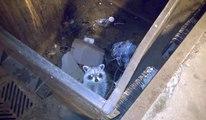 Un Spi0nneur sauve un raton laveur coincé dans une benne