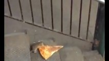 Pizza Rat: New York City rat taking pizza home on the subway