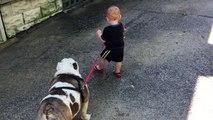 11 mois en essayant de marcher £ 80 bulldog