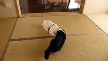 Bu kedilere gülmekten öldüm  -) ☆ Komedi ve Eğlence izle (video)  ツ