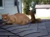 Кот и белочка!
