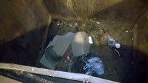 Un homme sauve un raton laveur coincé dans une poubelle