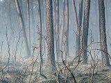 L'incendie près de Lacanau circonscrit, 650 hectares détruits