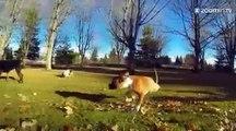 Un chien heureux sur deux pattes