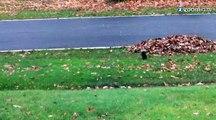 Un écureuil qui dort debout
