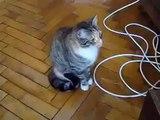 Ce chat n'aime pas les lecteurs CD