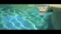 drôle de chat vidéos essayez de ne pas rire ou sourire [pour les enfants] - drôle de chat vidéos compilation 2015