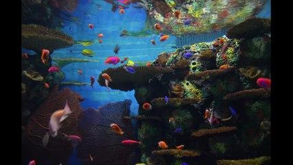 Aquarium de Shanghai