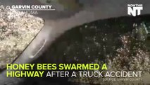 Truck Carrying Millions Of Bees Overturns on Highway