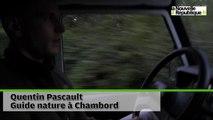VIDEO. Ecouter le brame du cerf à Chambord