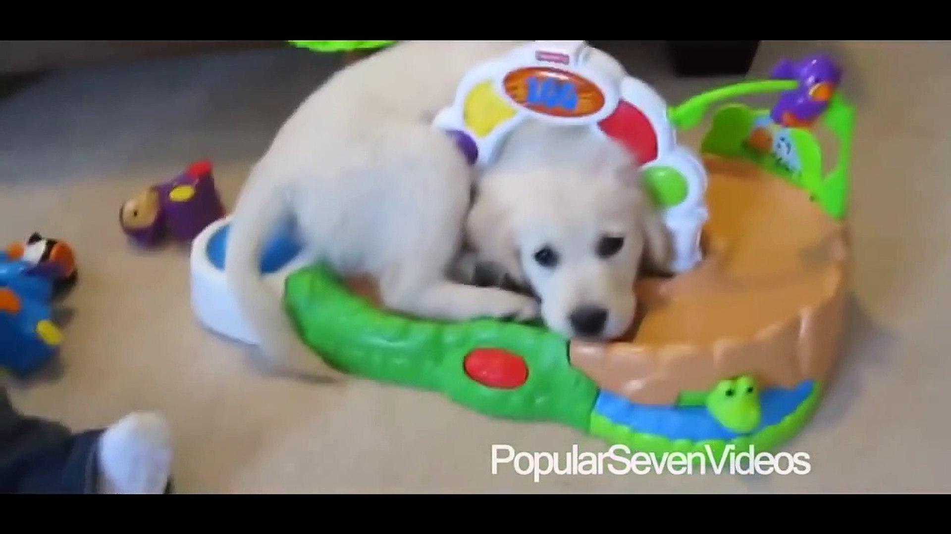 Bebeklerin Sevimli Kedi ve Köpeklerle Oynaması