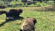 Battle Cats: Kung Fu Cat/ Drunken Master Cat - video dailymotion