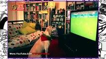 Increible Perro que le gusta el Futbol celebra Gol Del Mundial Brasil 2014