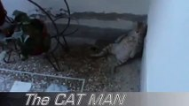 FUNNY VIDEOS: Funny Cats Funny Cat Videos Funny Animals Fail Compilation Cats Fails #2