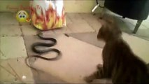 Cat vs Snake! TOP 10! Amazing Cat Attack Snake - Compilation 2015!!!