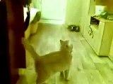Amusant drôle de chat drôle de chat vidéo drôle chiens et chats drôle fun avec des chats