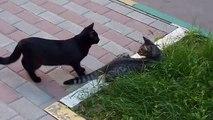 Cat chats amusants pris oiseaux Regardez!