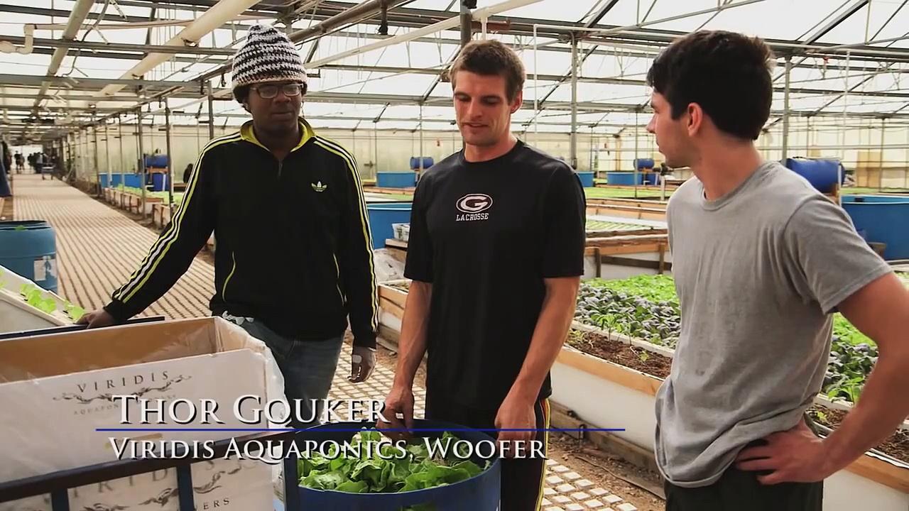 California's Largest Aquaponics Greenhouse Facility & the Dream = Aquaponics Greenhouses in Schools!