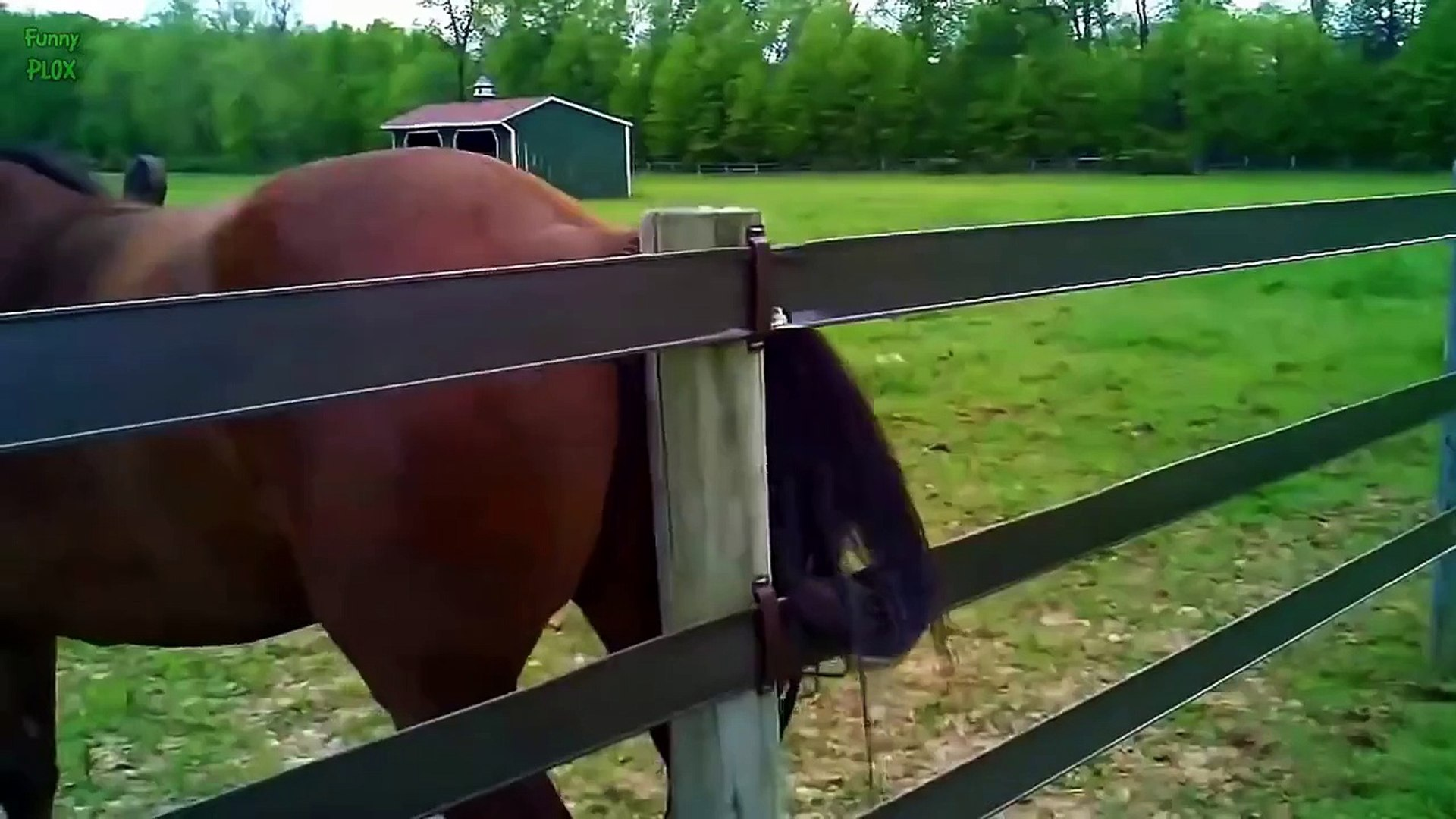 Top 10 Funny Horse Videos 2015 Love Babies Video Dailymotion