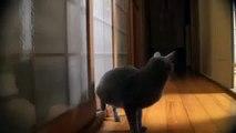 Cat Cat amusant de détruire le look de la porte d'entrée!