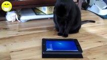 videos graciosos 2014 videos de risa de gatos chistosos jugando con el Ipad