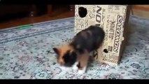 Le chat nage dans la baignoire et d'autres chats amusant