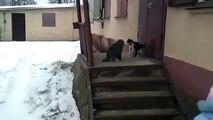 Lustige Katzen epischen Kampf!